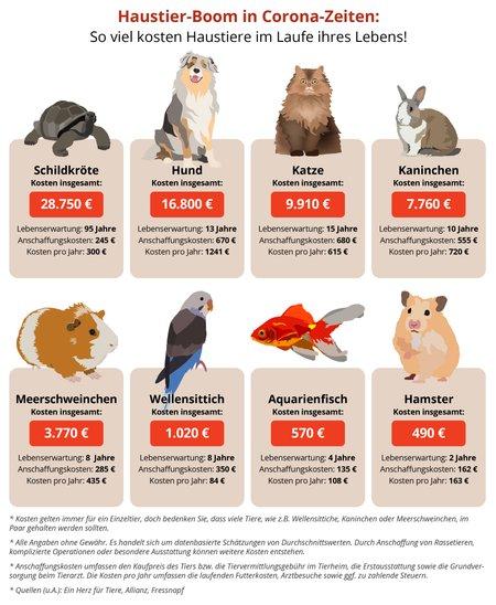 Haustier Kosten