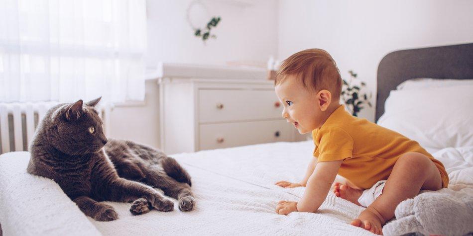 katze und baby geht das  familiede