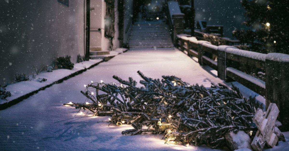 Weihnachtsbaum entsorgen: die besten Tipps   familie.de