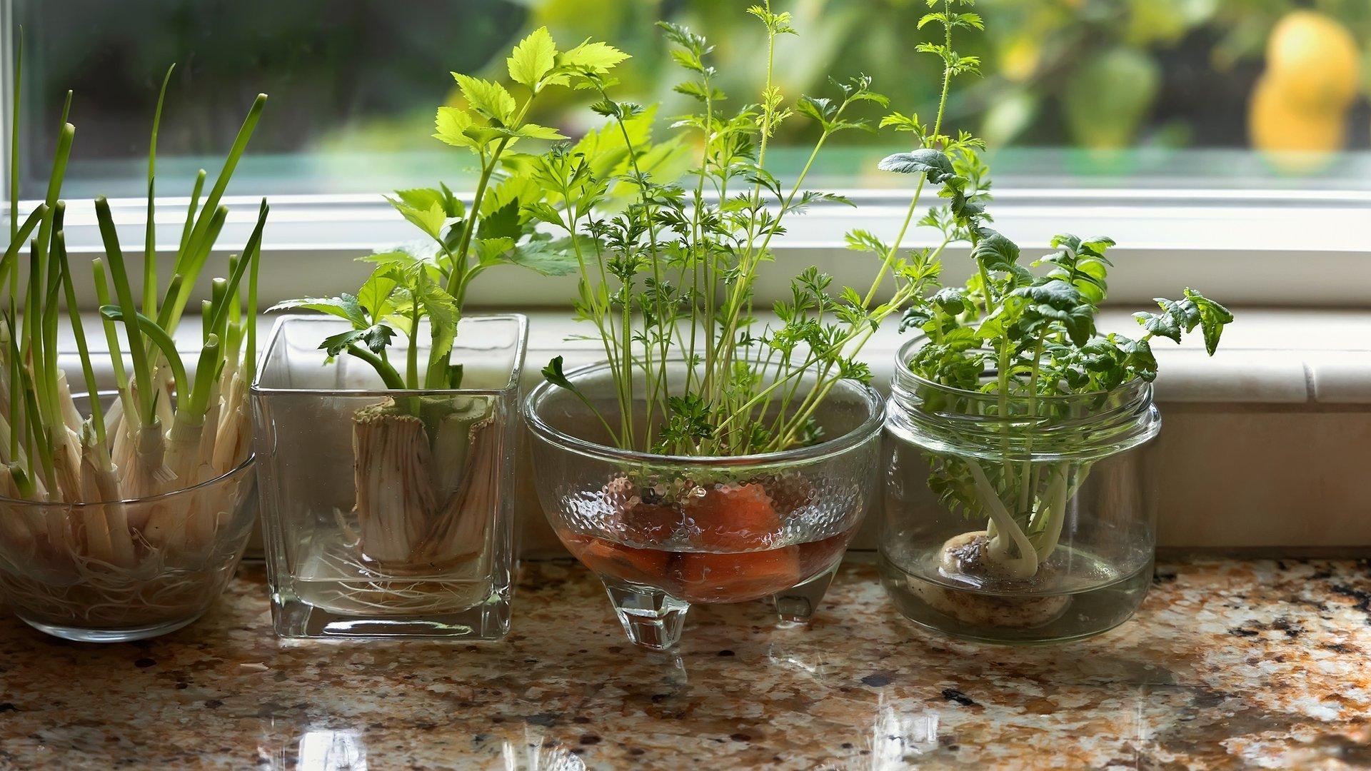 Regrowing Mit diesen Tipps klappt das Gemüse Recycling   familie.de