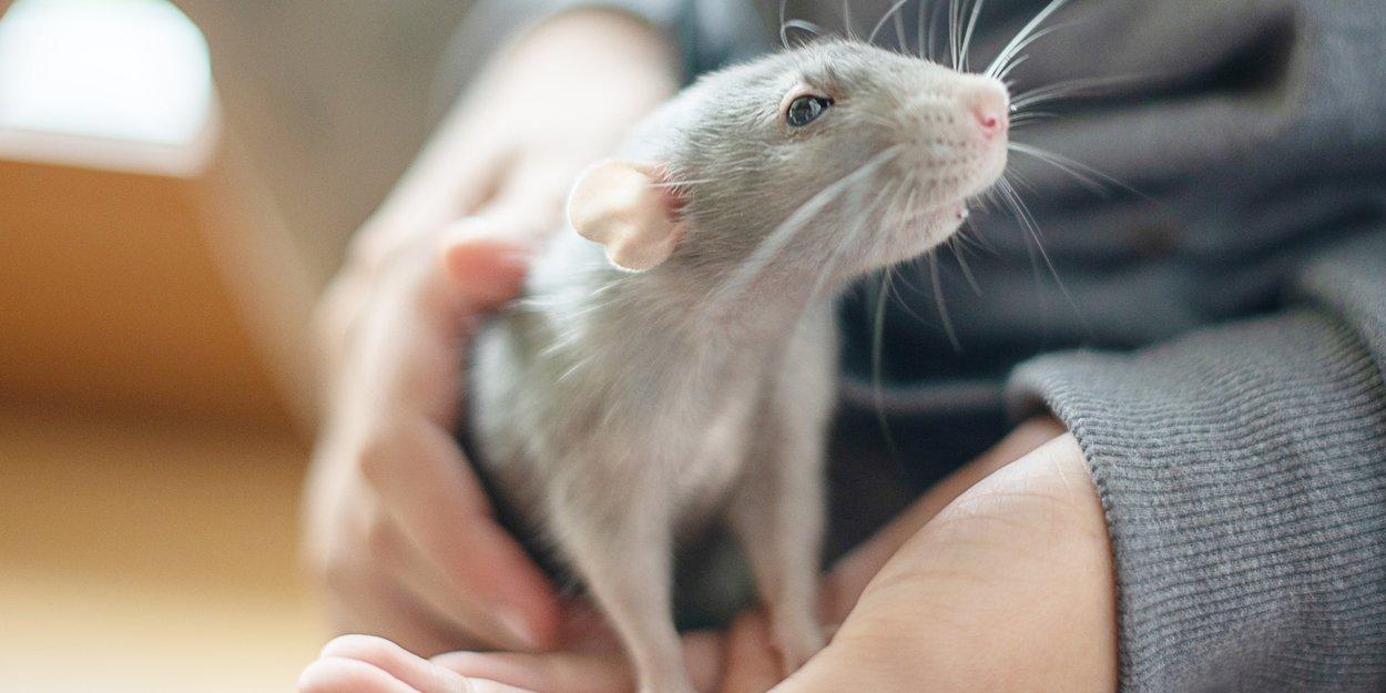 Exotische Haustiere Welche Tiere Geeignet Sind Familie De