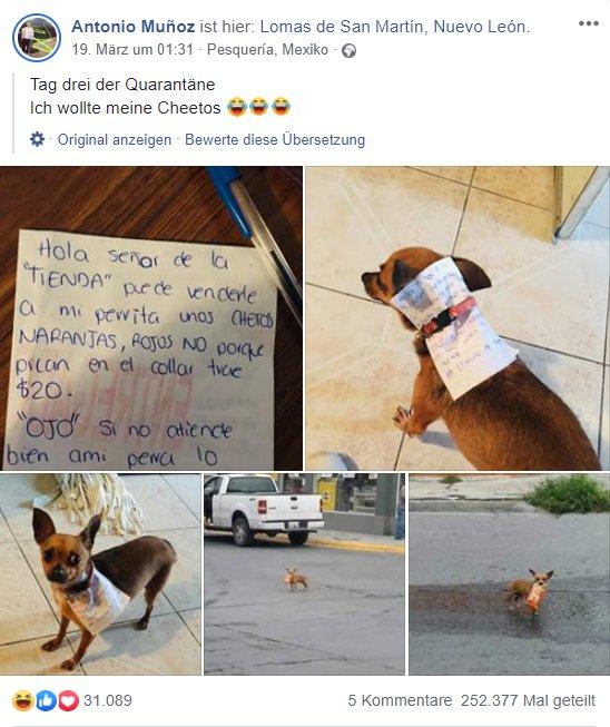 Hund einkaufen