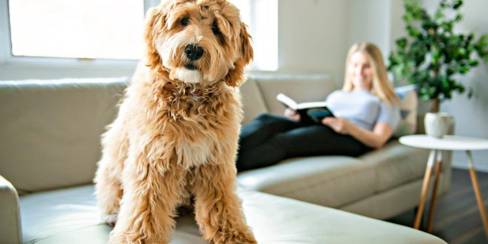 Allergiker hunde geeignet für Welcher Hund