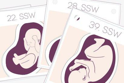 Mit dem Schwangerschaftskalender durch 40 spannende Woche