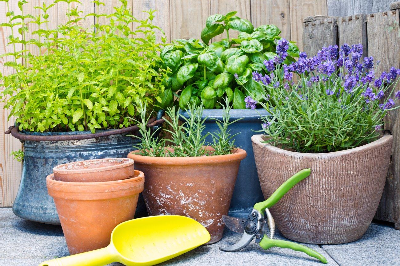 Rosmarin Thymian Bienenfreundliche Pflanzen